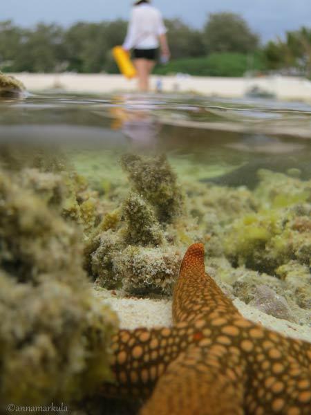 starfishandbeach