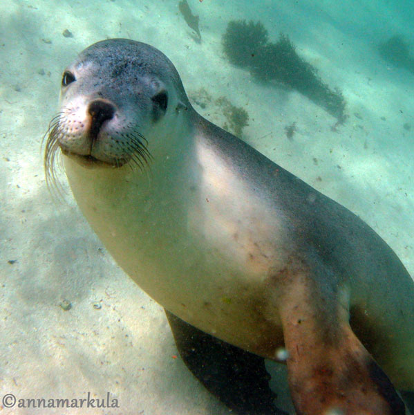 smiley seal