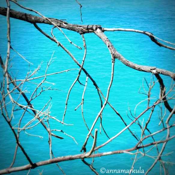 tree and sea - North Stradbroke Island