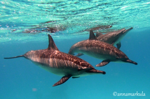 3 dolphins