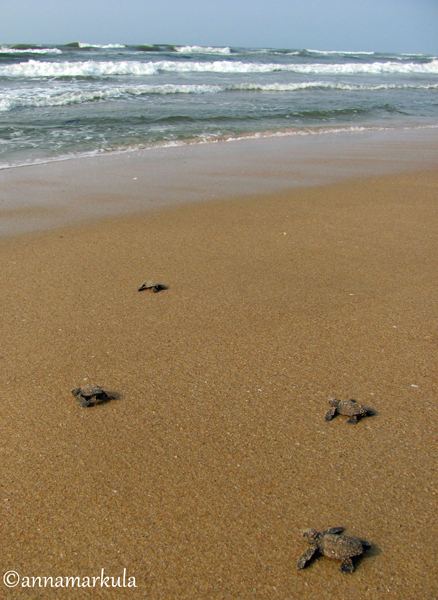 four_turtles