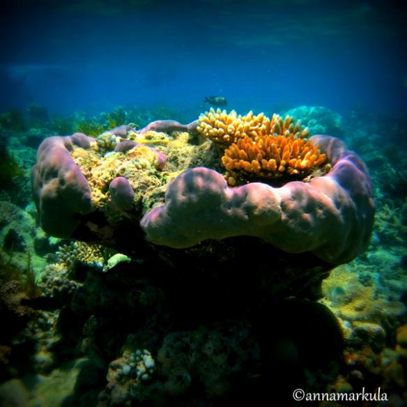 coral_lomo