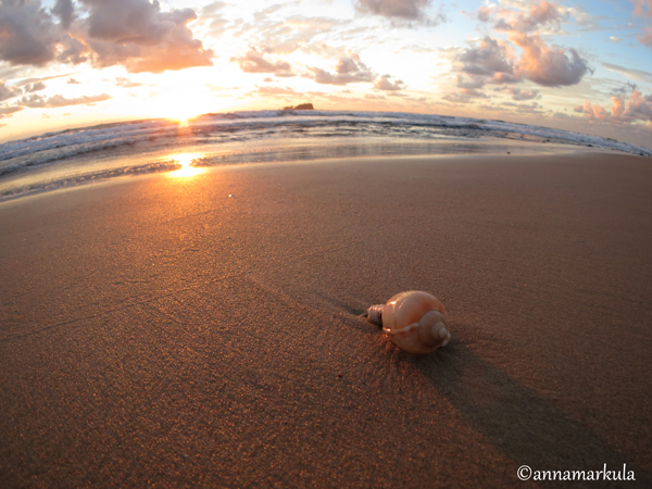 mudjimba_sunrise_shell