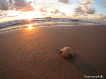 mudjimba_sunrise_shell