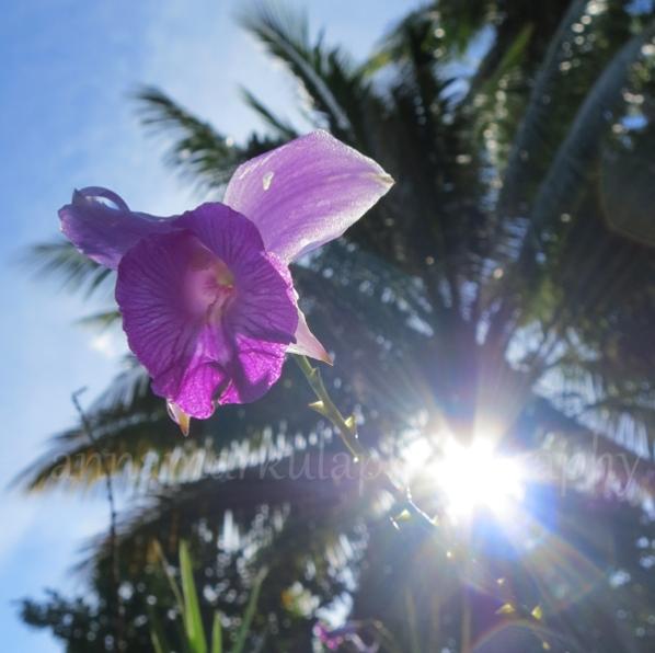 orchid_sun