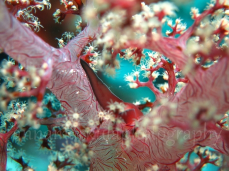 soft_coral_red_blue