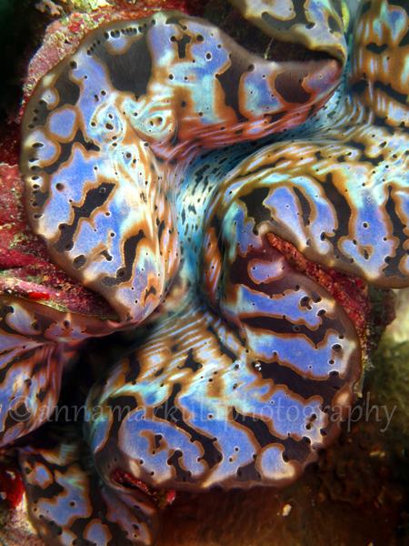 cool_clam_sideways