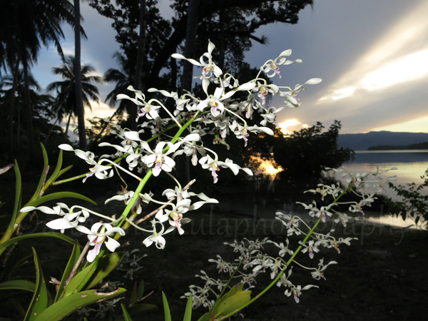 orchid_sunset