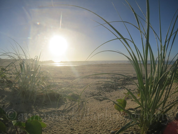 beach_spinifex