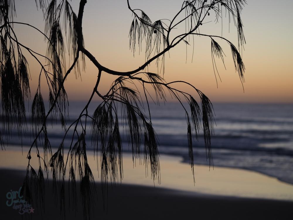 casuarina silhouette dusk Mudjimba Beach