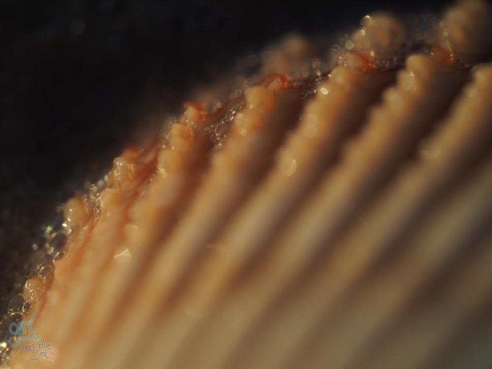 macro close up shell