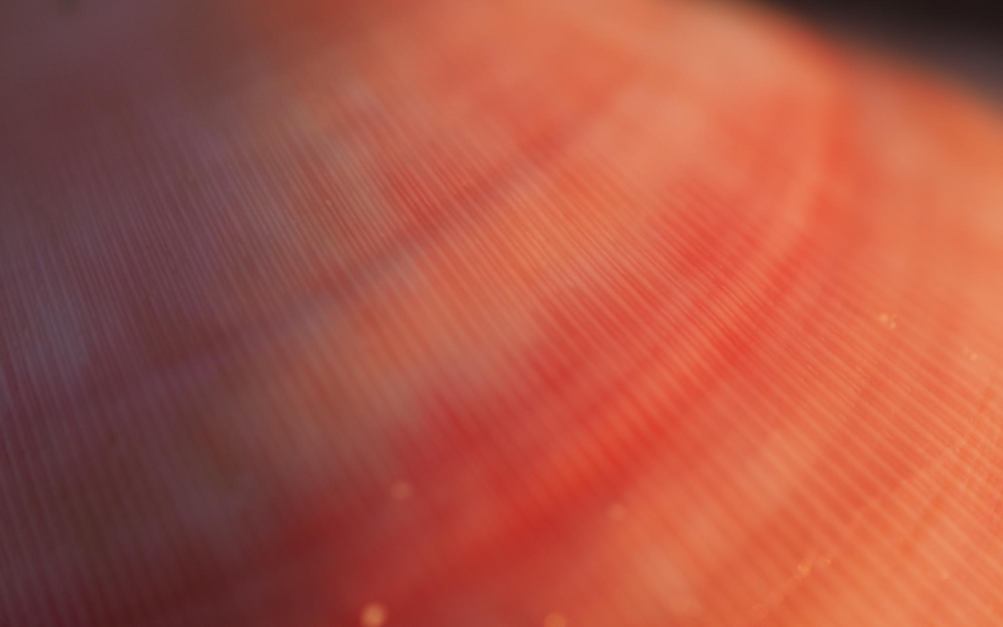 macro close up pink shell