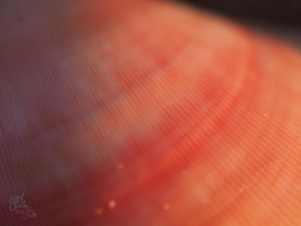 pink shell macro close up