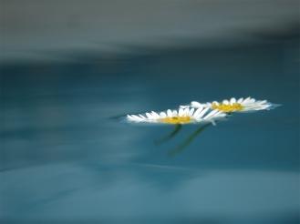 Daisy Swirl