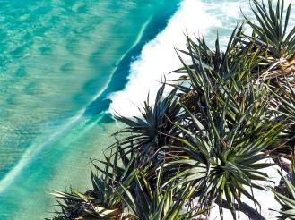 Pandanus Wave Break
